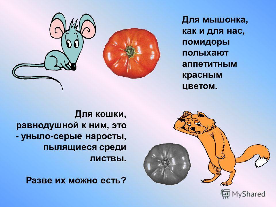 Для кошки, равнодушной к ним, это - уныло-серые наросты, пылящиеся среди листвы. Разве их можно есть? Для мышонка, как и для нас, помидоры полыхают аппетитным красным цветом.