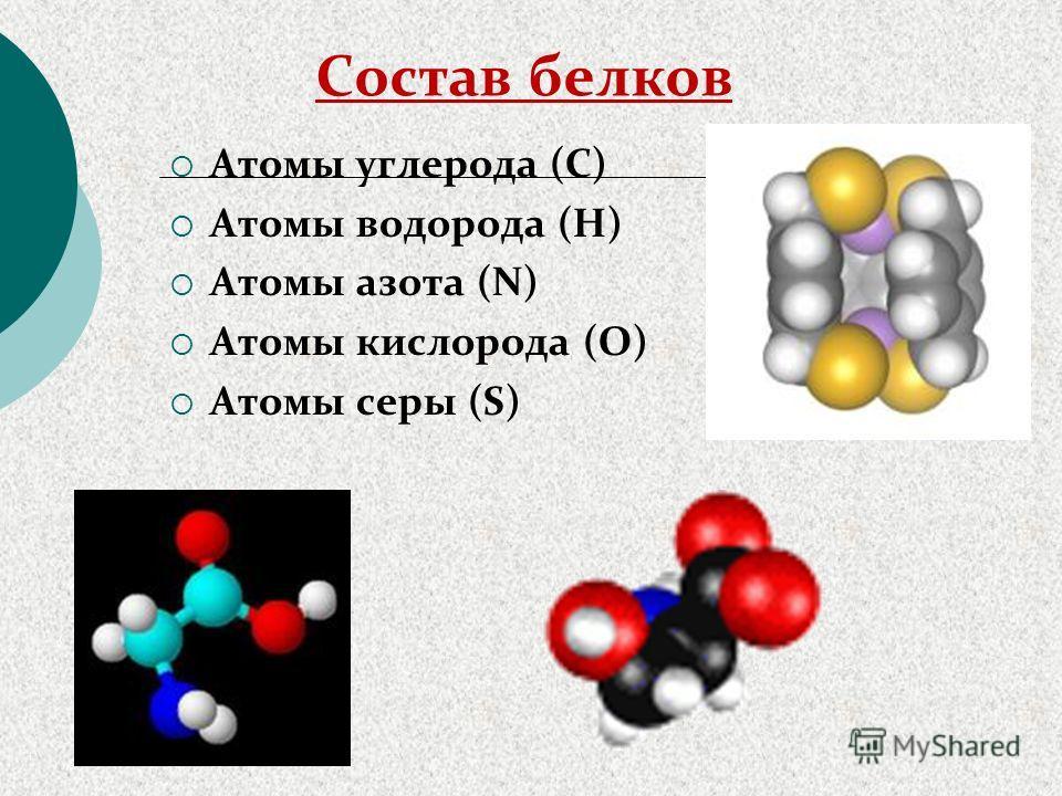 Состав белков Атомы углерода (С) Атомы водорода (Н) Атомы азота (N) Атомы кислорода (О) Атомы серы (S)