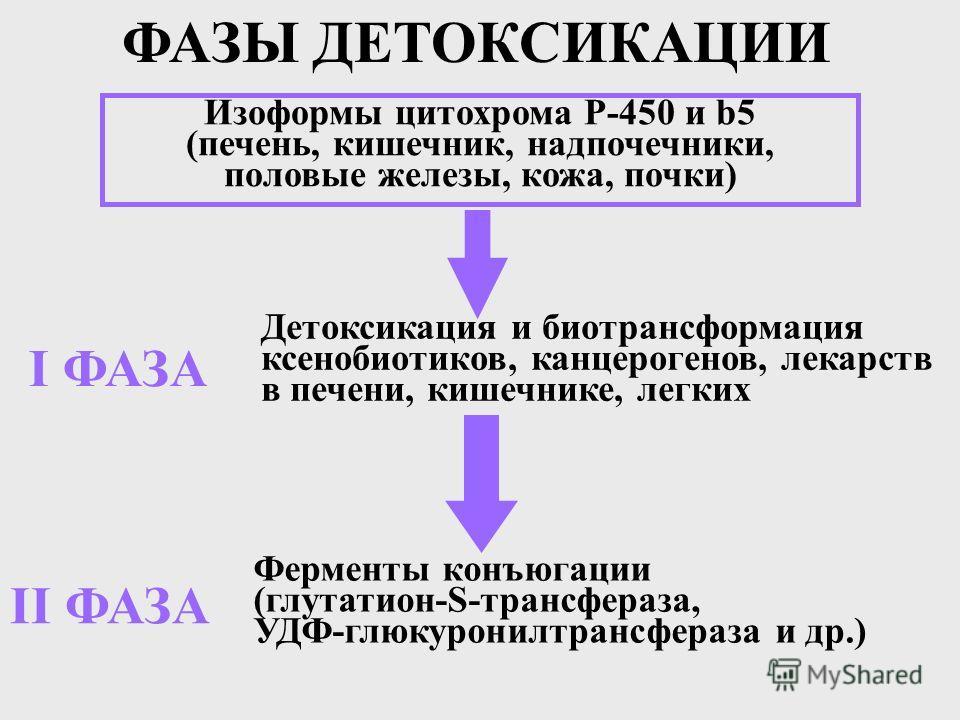 Детоксикация и биотрансформация ксенобиотиков, канцерогенов, лекарств в печени, кишечнике, легких Ферменты конъюгации (глутатион-S-трансфераза, УДФ-глюкуронилтрансфераза и др.) Изоформы цитохрома Р-450 и b5 (печень, кишечник, надпочечники, половые же