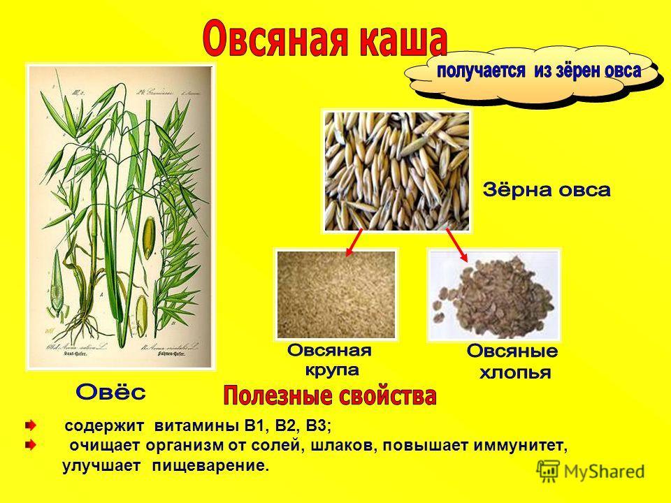 содержит витамины B1, В2, В3; очищает организм от солей, шлаков, повышает иммунитет, улучшает пищеварение.