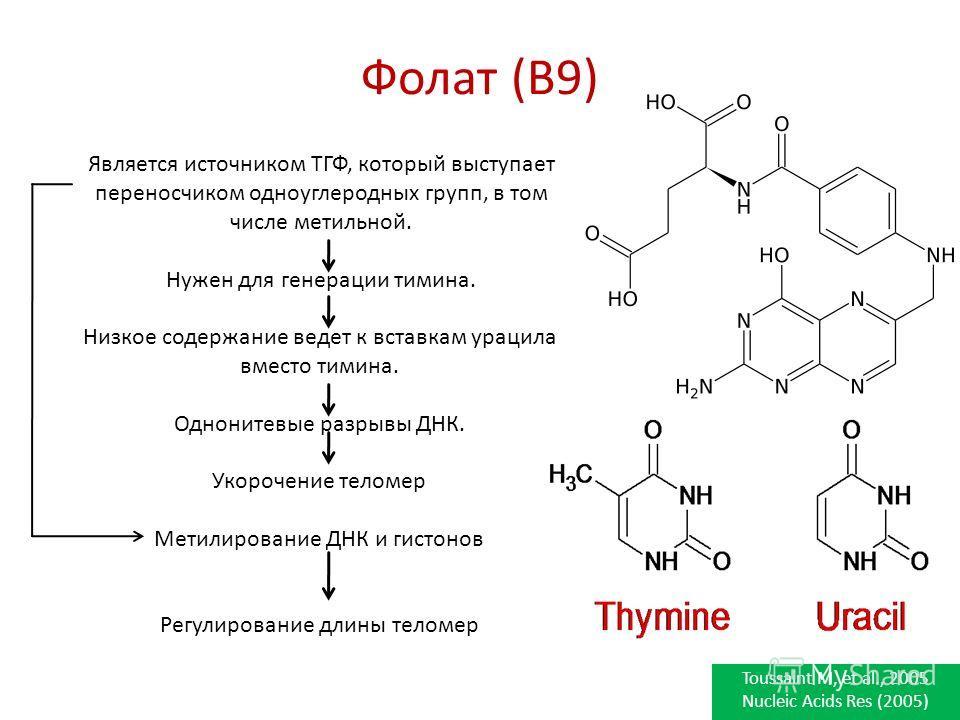 Фолат (B9) Является источником ТГФ, который выступает переносчиком одноуглеродных групп, в том числе метильной. Нужен для генерации тимина. Низкое содержание ведет к вставкам урацила вместо тимина. Однонитевые разрывы ДНК. Укорочение теломер Метилиро