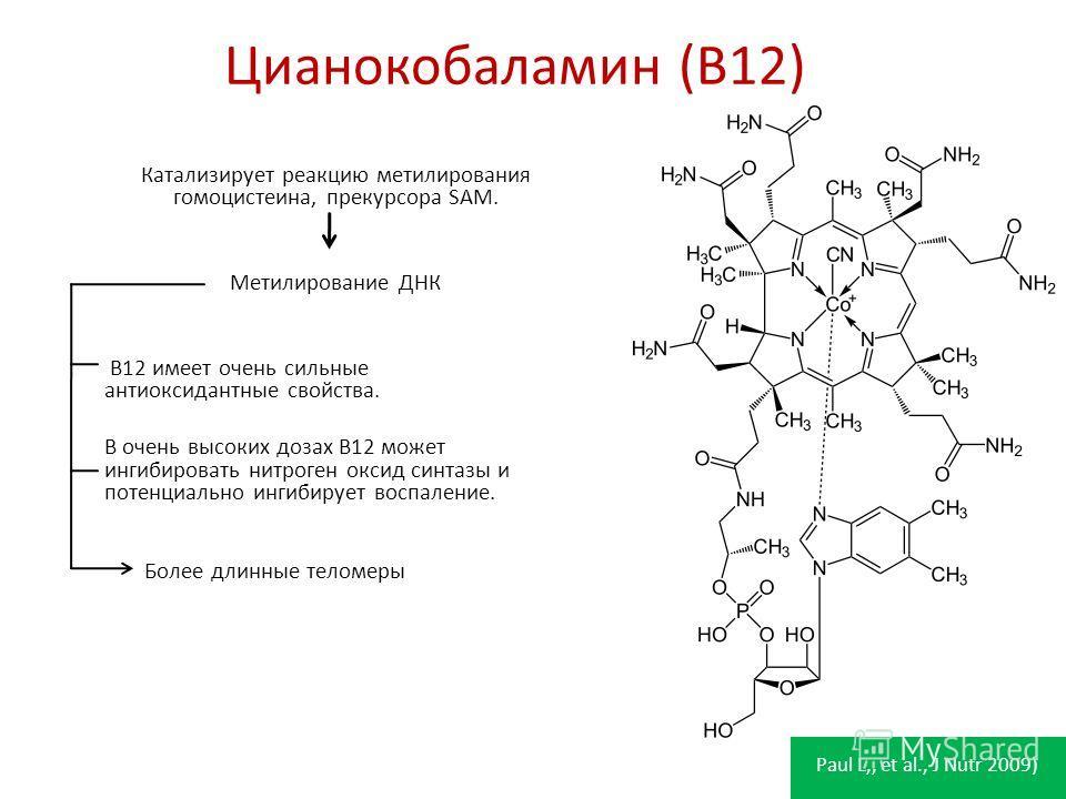Цианокобаламин (B12) Катализирует реакцию метилирования гомоцистеина, прекурсора SAM. Метилирование ДНК B12 имеет очень сильные антиоксидантные свойства. В очень высоких дозах B12 может ингибировать нитроген оксид синтазы и потенциально ингибирует во