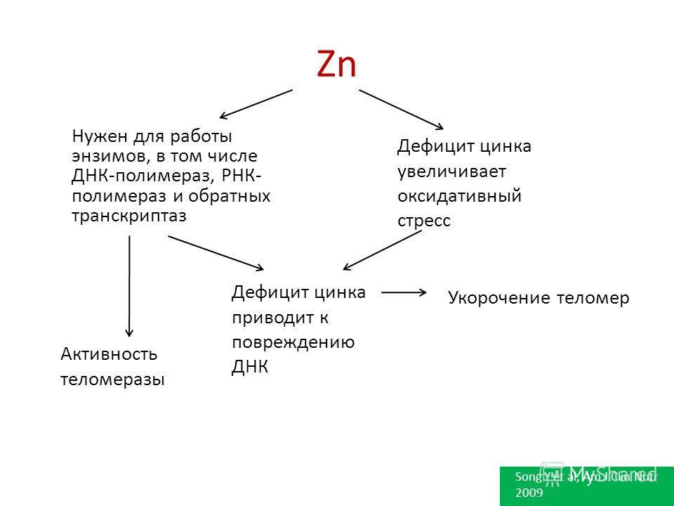 Zn Нужен для работы энзимов, в том числе ДНК-полимераз, РНК- полимераз и обратных транскриптаз Дефицит цинка увеличивает оксидативный стресс Дефицит цинка приводит к повреждению ДНК Активность теломеразы Укорочение теломер Song Y et al, Am J Clin Nut