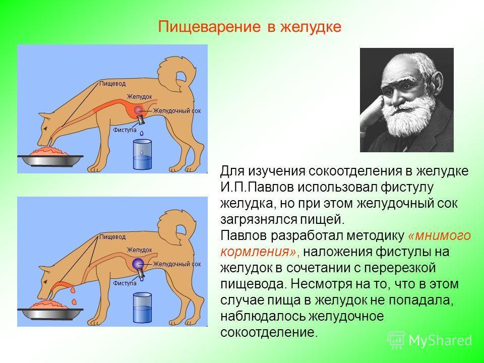 Для изучения сокоотделения в желудке И.П.Павлов использовал фистулу желудка, но при этом желудочный сок загрязнялся пищей. Павлов разработал методику «мнимого кормления», наложения фистулы на желудок в сочетании с перерезкой пищевода. Несмотря на то,