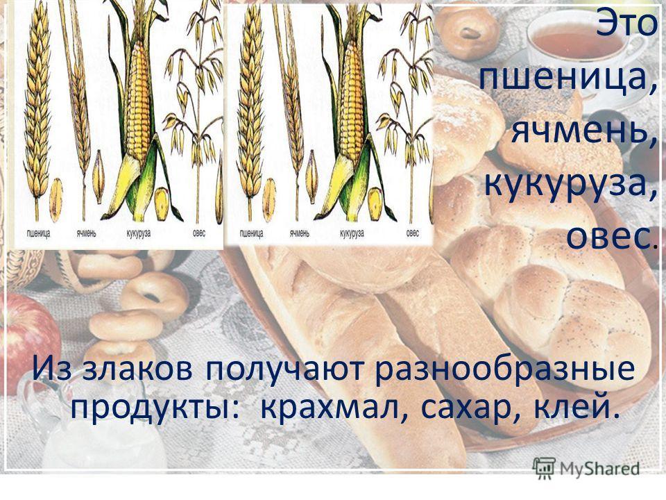 Это пшеница, ячмень, кукуруза, овес. Из злаков получают разнообразные продукты: крахмал, сахар, клей.