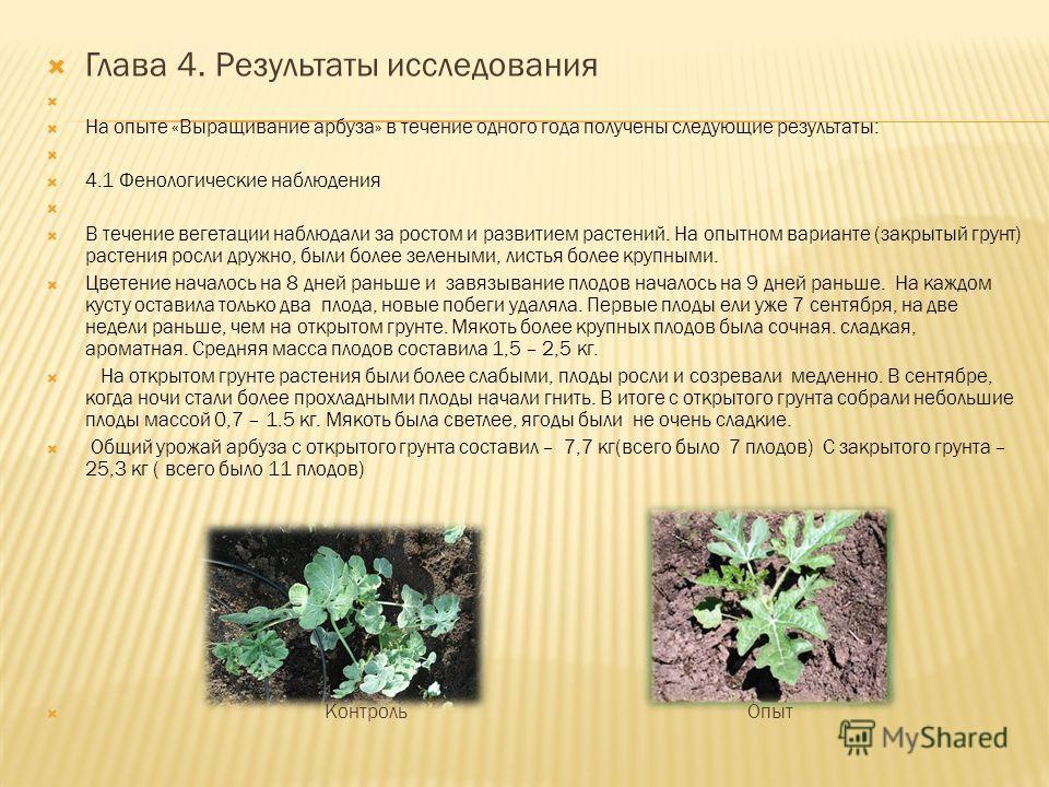Глава 4. Результаты исследования На опыте «Выращивание арбуза» в течение одного года получены следующие результаты: 4.1 Фенологические наблюдения В течение вегетации наблюдали за ростом и развитием растений. На опытном варианте (закрытый грунт) расте