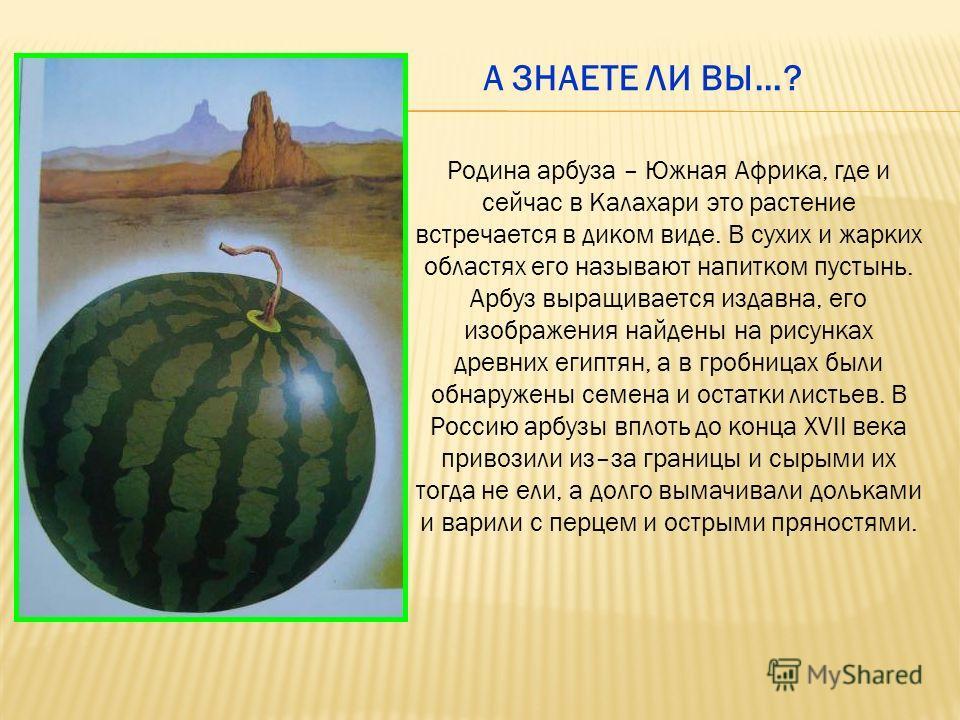 Родина арбуза – Южная Африка, где и сейчас в Калахари это растение встречается в диком виде. В сухих и жарких областях его называют напитком пустынь. Арбуз выращивается издавна, его изображения найдены на рисунках древних египтян, а в гробницах были