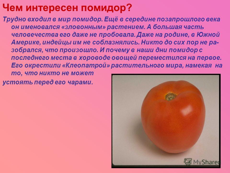 Чем интересен помидор? Трудно входил в мир помидор. Ещё в середине позапрошлого века он именовался «зловонным» растением. А большая часть человечества его даже не пробовала. Даже на родине, в Южной Америке, индейцы им не соблазнялись. Никто до сих по