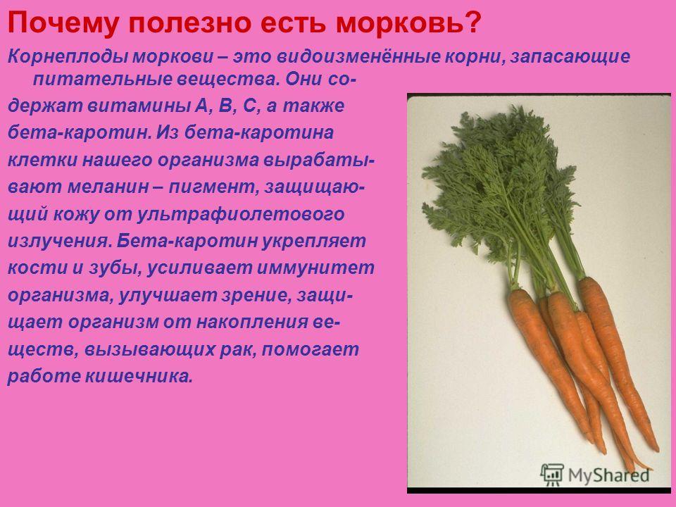 Почему полезно есть морковь? Корнеплоды моркови – это видоизменённые корни, запасающие питательные вещества. Они со- держат витамины А, В, С, а также бета-каротин. Из бета-каротина клетки нашего организма вырабаты- вают меланин – пигмент, защищаю- щи