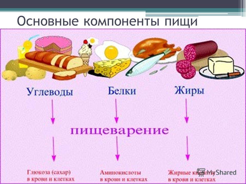 Основные компоненты пищи