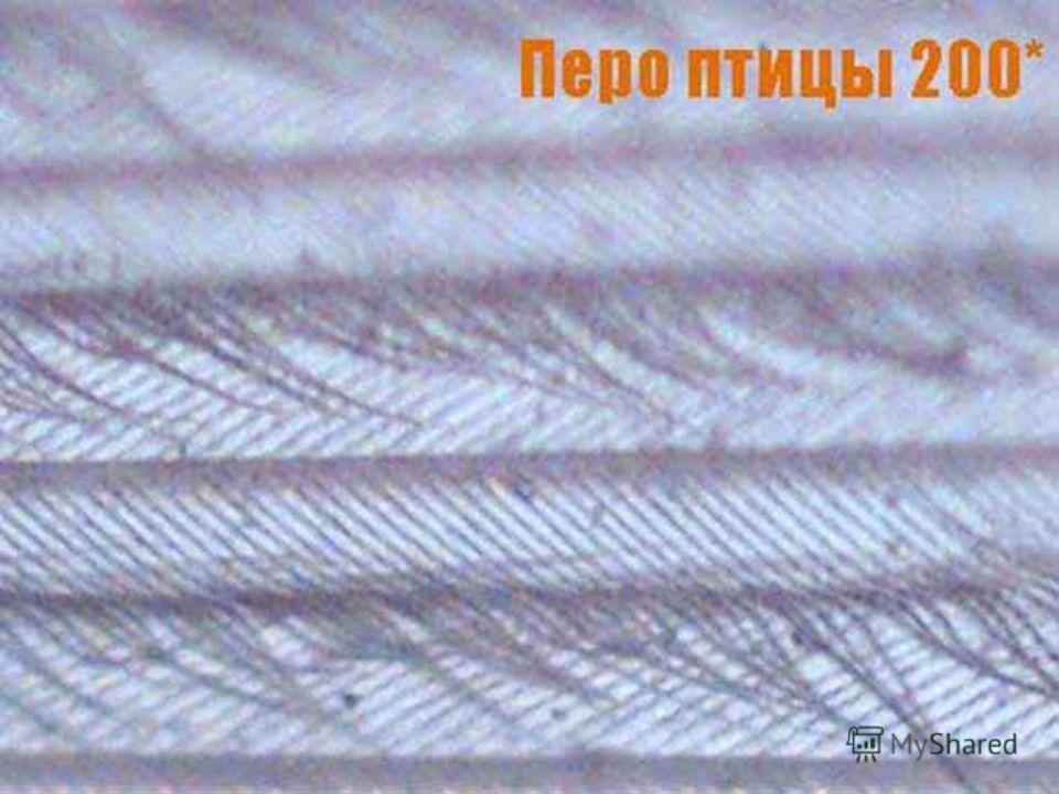 Фотография пера птицы (200*)