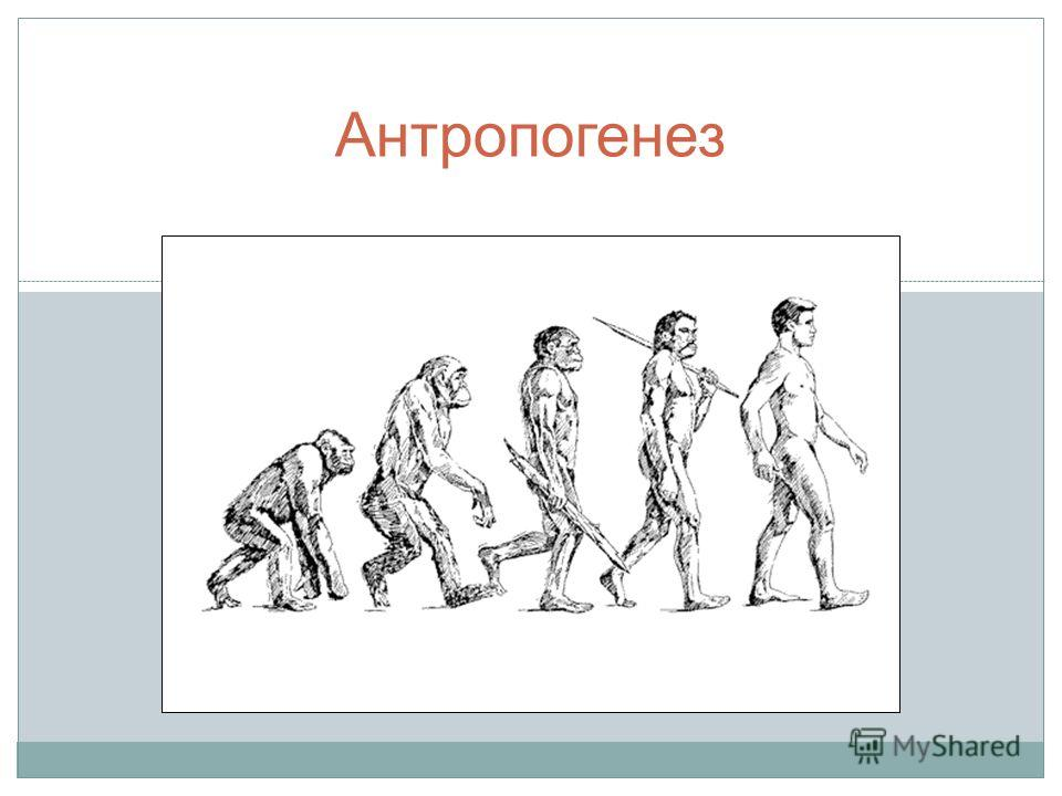 Антропогенез