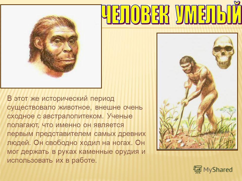 В этот же исторический период существовало животное, внешне очень сходное с австралопитеком. Ученые полагают, что именно он является первым представителем самых древних людей. Он свободно ходил на ногах. Он мог держать в руках каменные орудия и испол