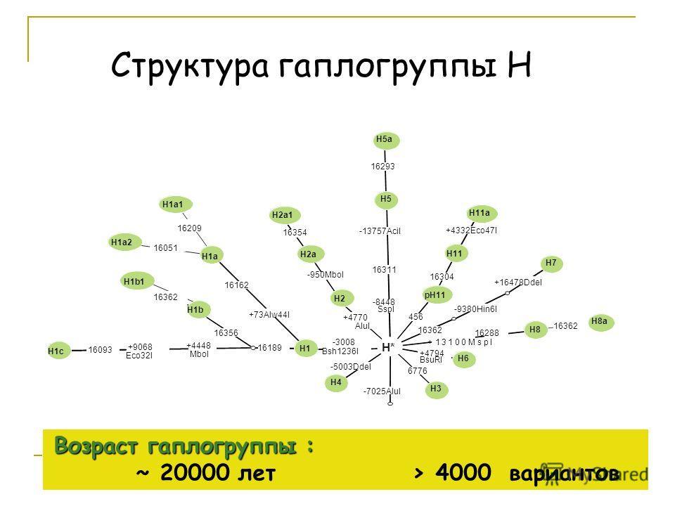 Структура гаплогруппы Н Возраст гаплогруппы : Возраст гаплогруппы : ~ 20000 лет > 4000 вариантов