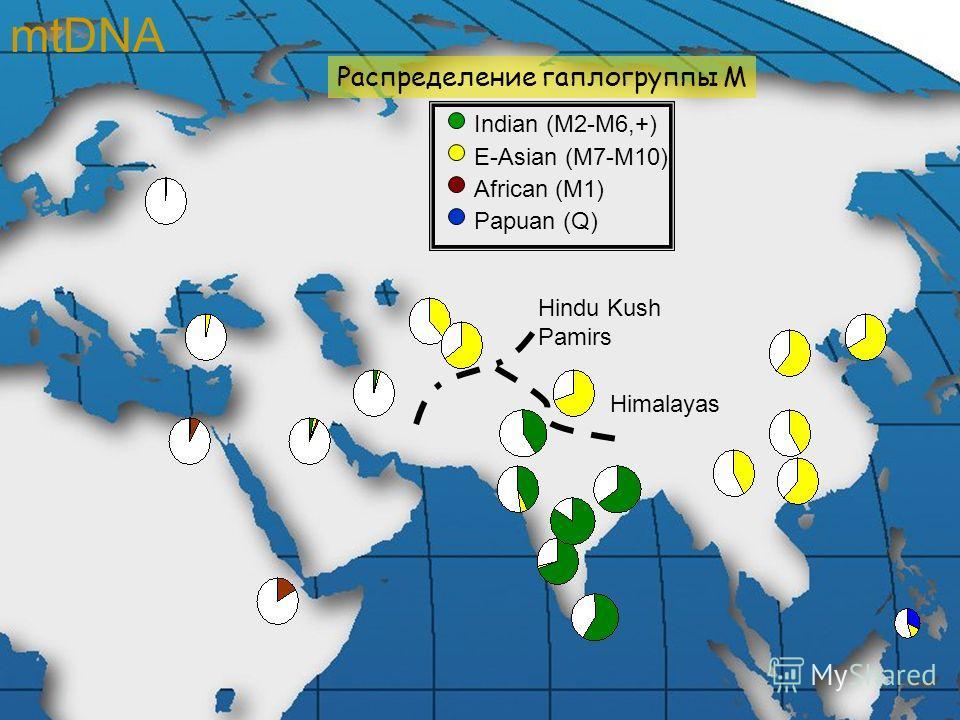 Распределение гаплогруппы М Indian (M2-M6,+) E-Asian (M7-M10) African (M1) Papuan (Q) Himalayas Hindu Kush Pamirs mtDNA