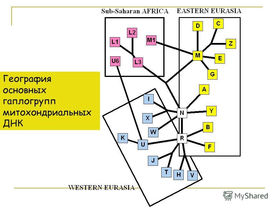 География основных гаплогрупп митохондриальных ДНК