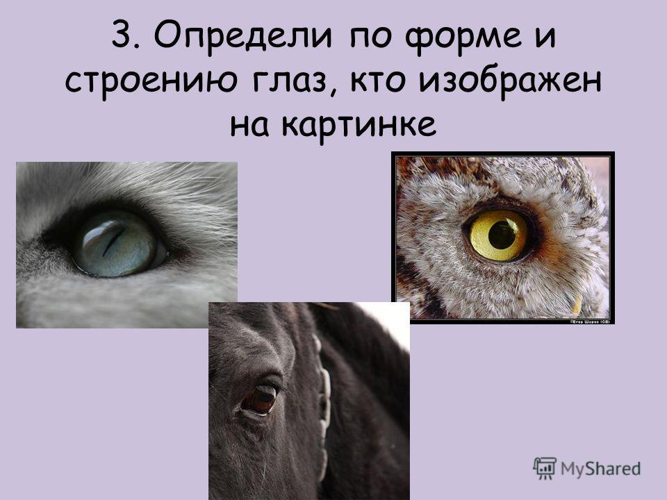 3. Определи по форме и строению глаз, кто изображен на картинке
