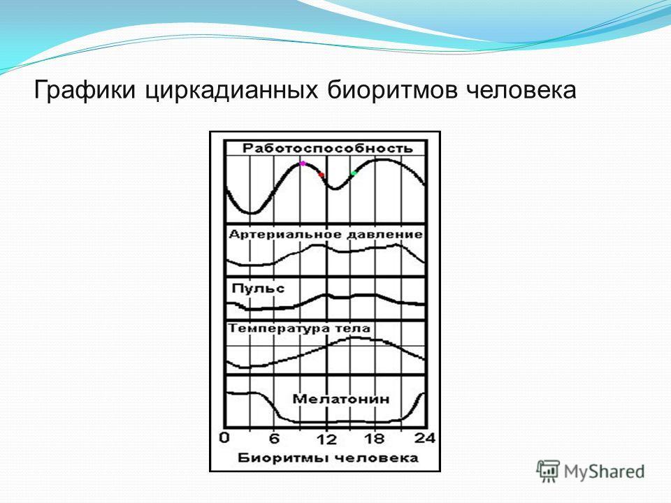 Графики циркадианных биоритмов человека
