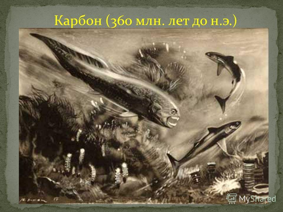 Карбон (360 млн. лет до н.э.)