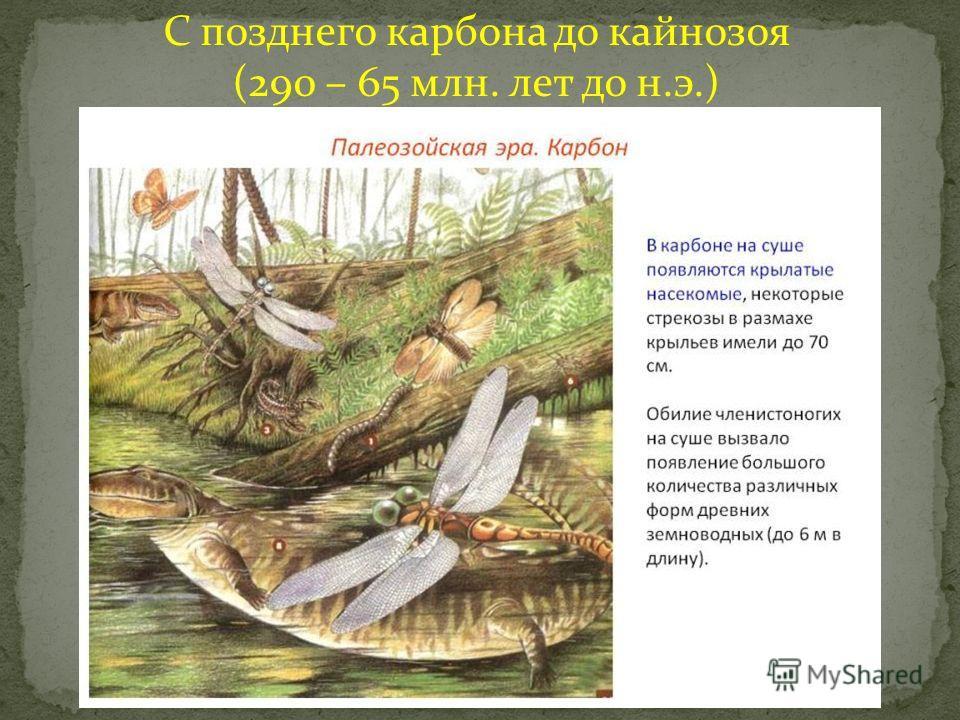 С позднего карбона до кайнозоя (290 – 65 млн. лет до н.э.)