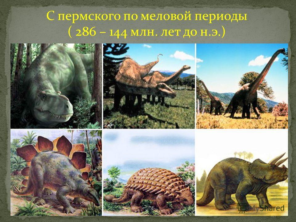 С пермского по меловой периоды ( 286 – 144 млн. лет до н.э.)