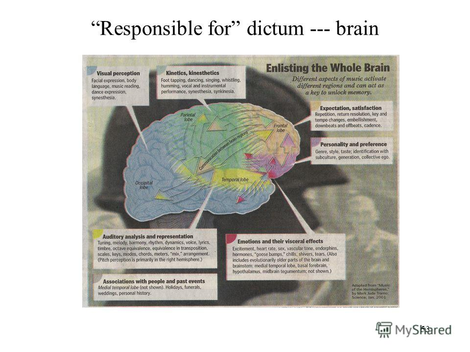 53 Responsible for dictum --- brain