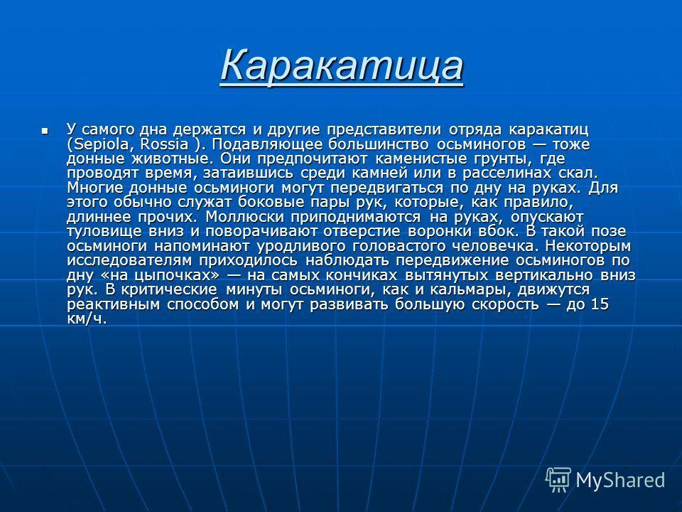 Каракатица У самого дна держатся и другие представители отряда каракатиц (Sepiola, Rossia ). Подавляющее большинство осьминогов тоже донные животные. Они предпочитают каменистые грунты, где проводят время, затаившись среди камней или в расселинах ска