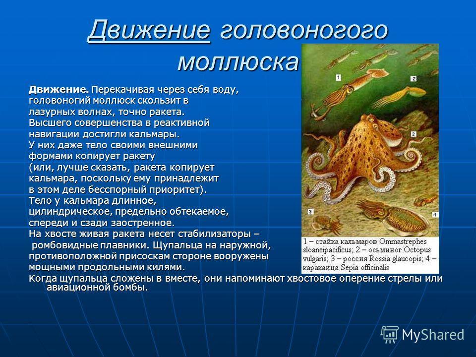 Движение головоногого моллюска Движение. Перекачивая через себя воду, головоногий моллюск скользит в лазурных волнах, точно ракета. Высшего совершенства в реактивной навигации достигли кальмары. У них даже тело своими внешними формами копирует ракету