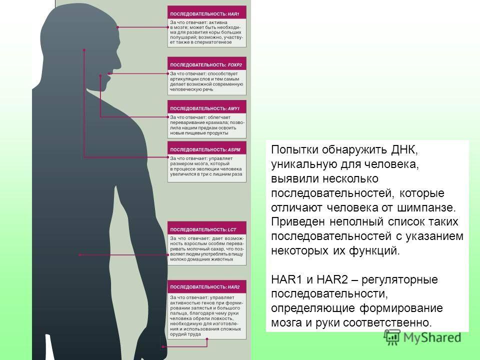 Попытки обнаружить ДНК, уникальную для человека, выявили несколько последовательностей, которые отличают человека от шимпанзе. Приведен неполный список таких последовательностей с указанием некоторых их функций. HAR1 и HAR2 – регуляторные последовате