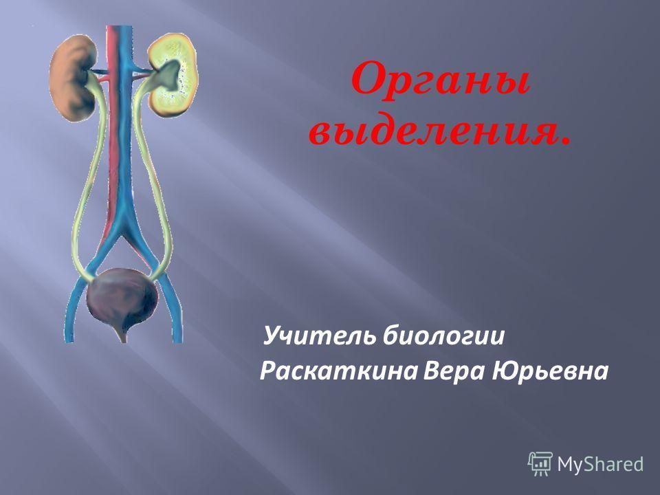 Органы выделения. Учитель биологии Раскаткина Вера Юрьевна