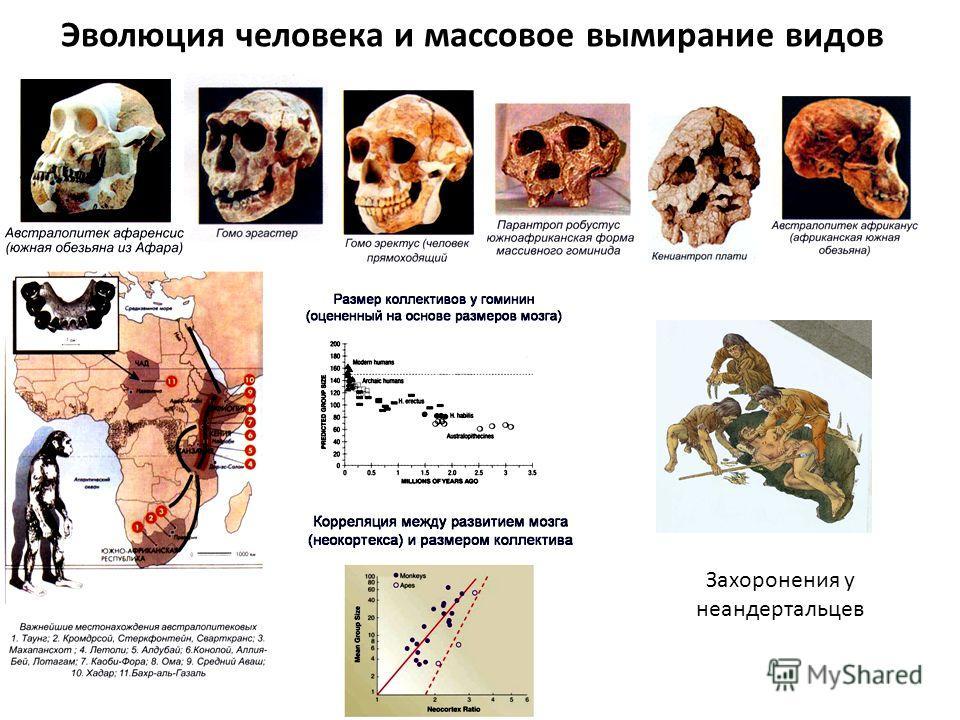 Эволюция человека и массовое вымирание видов Захоронения у неандертальцев