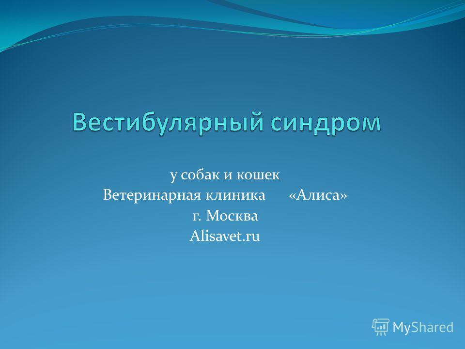 у собак и кошек Ветеринарная клиника «Алиса» г. Москва Alisavet.ru