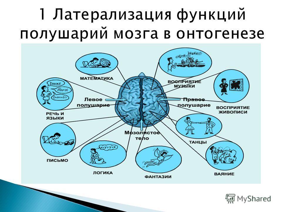 Доминанта и условный рефлекс как основные принципы интегративной деятельности мозга