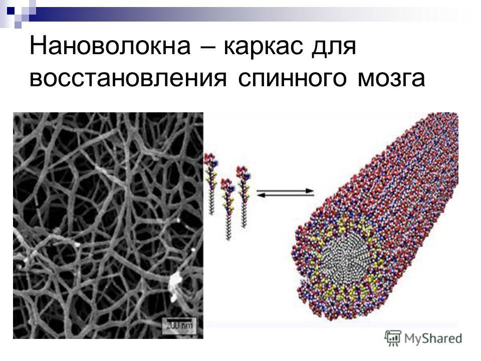 Нановолокна – каркас для восстановления спинного мозга