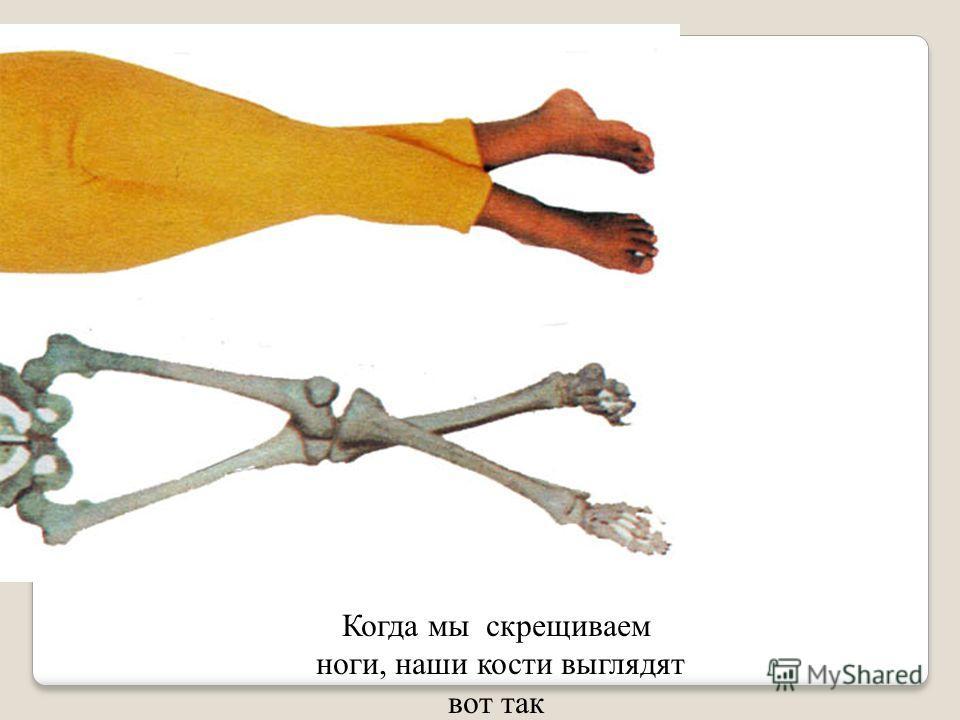 Внутри нашего тела находятся кости. Это – мы изнутри. Кости соединяются в скелет