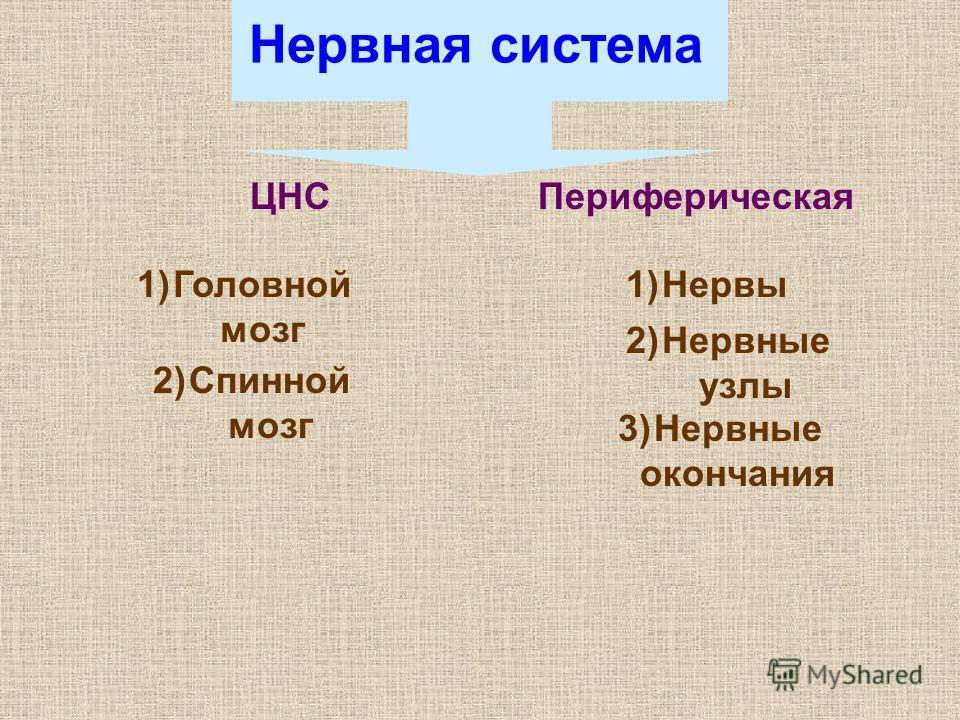 Нервная система ЦНСПериферическая 1)Головной мозг 2)Спинной мозг 1)Нервы 2)Нервные узлы 3)Нервные окончания