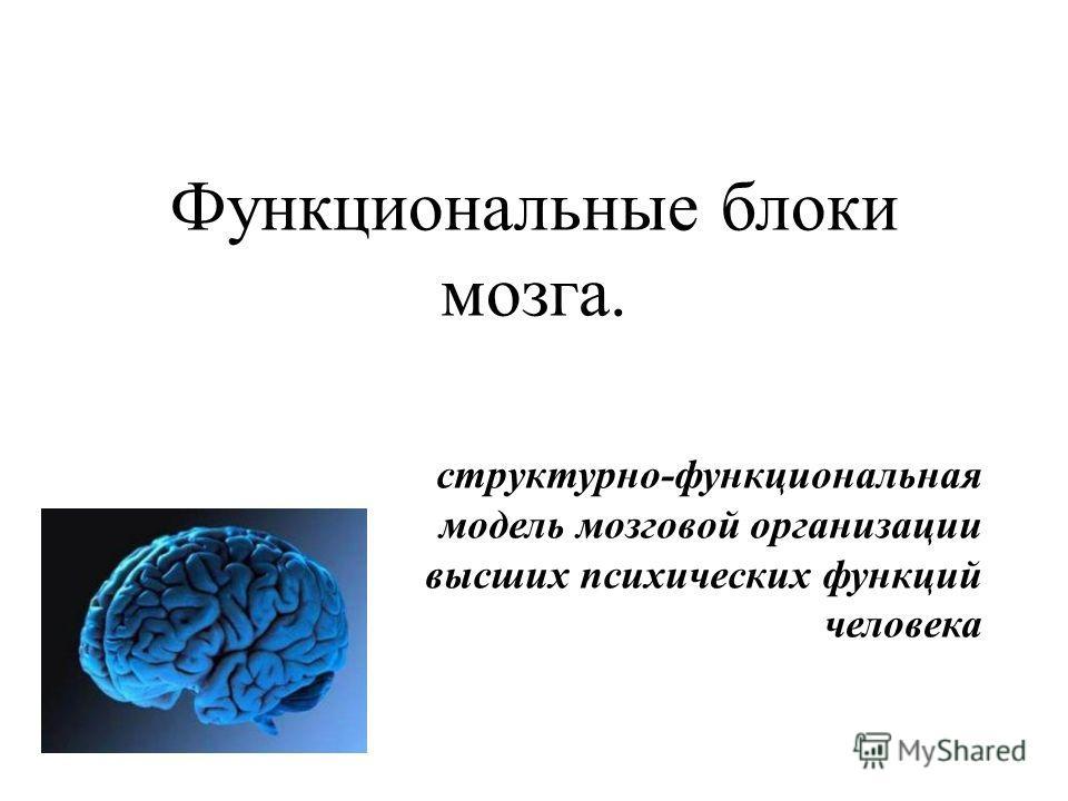 Функциональные блоки мозга. структурно-функциональная модель мозговой организации высших психических функций человека
