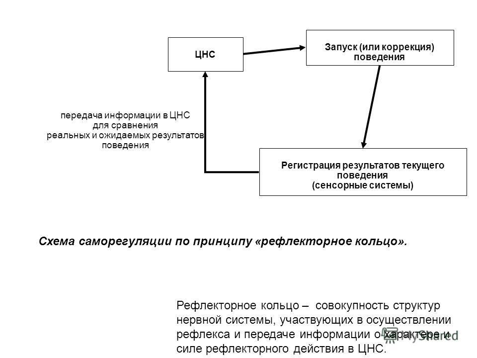 Схема саморегуляции по принципу «рефлекторное кольцо». Запуск (или коррекция) поведения ЦНС Регистрация результатов текущего поведения (сенсорные системы) передача информации в ЦНС для сравнения реальных и ожидаемых результатов поведения Рефлекторное