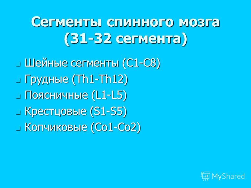 Сегменты спинного мозга (31-32 сегмента) Шейные сегменты (C1-C8) Шейные сегменты (C1-C8) Грудные (Th1-Th12) Грудные (Th1-Th12) Поясничные (L1-L5) Поясничные (L1-L5) Крестцовые (S1-S5) Крестцовые (S1-S5) Копчиковые (Co1-Co2) Копчиковые (Co1-Co2)