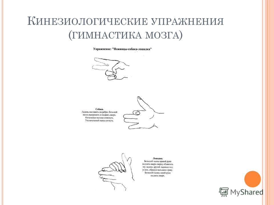 К ИНЕЗИОЛОГИЧЕСКИЕ УПРАЖНЕНИЯ ( ГИМНАСТИКА МОЗГА )