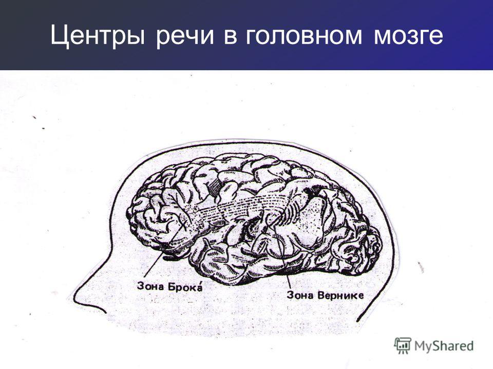 Центры речи в головном мозге