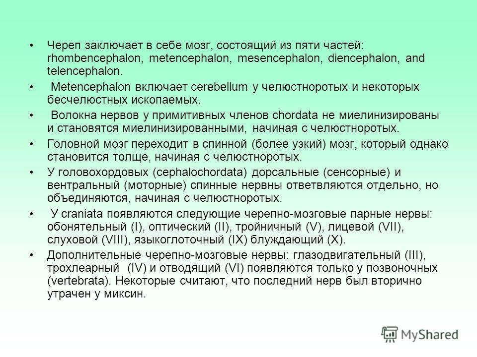 Череп заключает в себе мозг, состоящий из пяти частей: rhombencephalon, metencephalon, mesencephalon, diencephalon, and telencephalon. Metencephalon включает cerebellum у челюстноротых и некоторых бесчелюстных ископаемых. Волокна нервов у примитивных