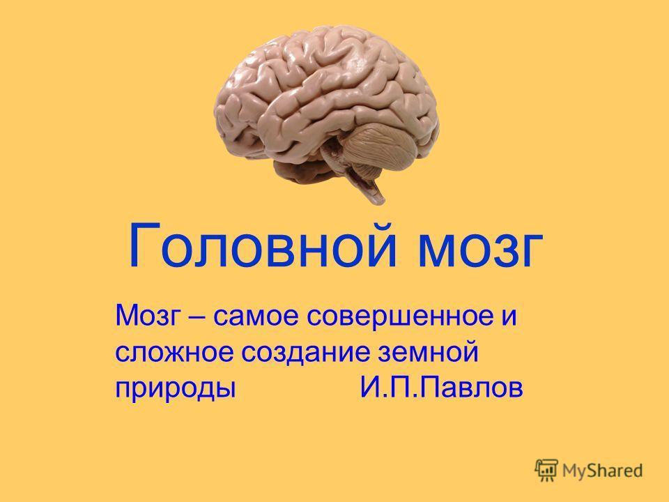 Головной мозг Мозг – самое совершенное и сложное создание земной природы И.П.Павлов