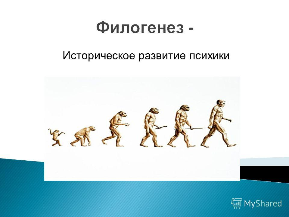 Филогенез - Историческое развитие психики