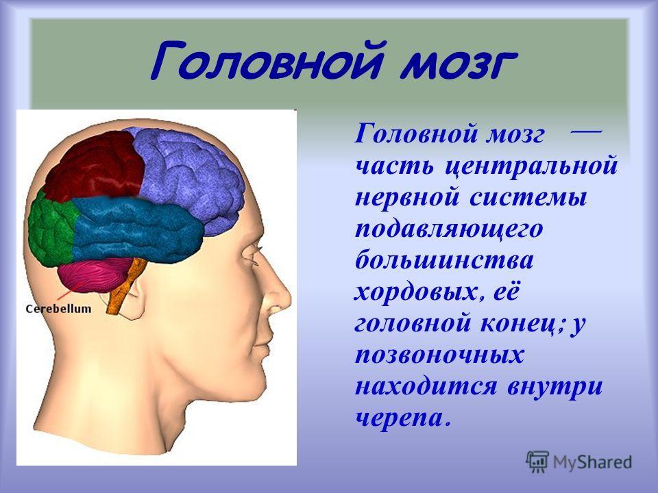 Головной мозг Головной мозг часть центральной нервной системы подавляющего большинства хордовых, её головной конец ; у позвоночных находится внутри черепа.