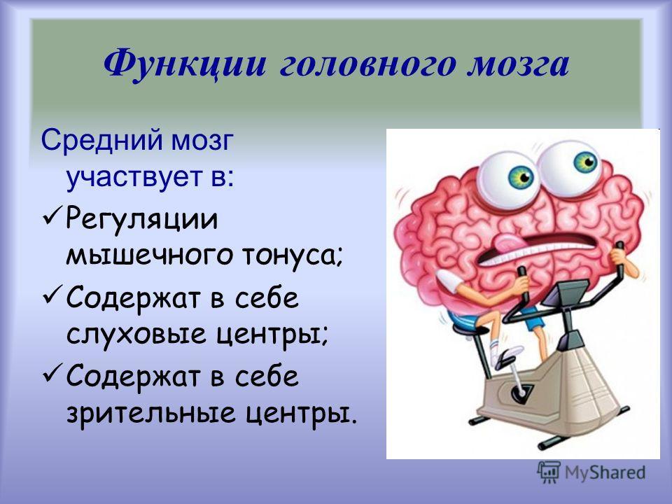 Средний мозг участвует в: Регуляции мышечного тонуса; Содержат в себе слуховые центры; Содержат в себе зрительные центры. Функции головного мозга