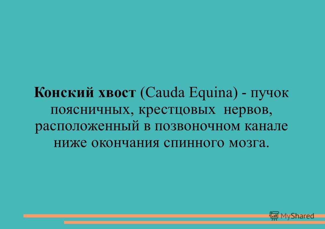 Конский хвост (Cauda Equina) - пучок поясничных, крестцовых нервов, расположенный в позвоночном канале ниже окончания спинного мозга.