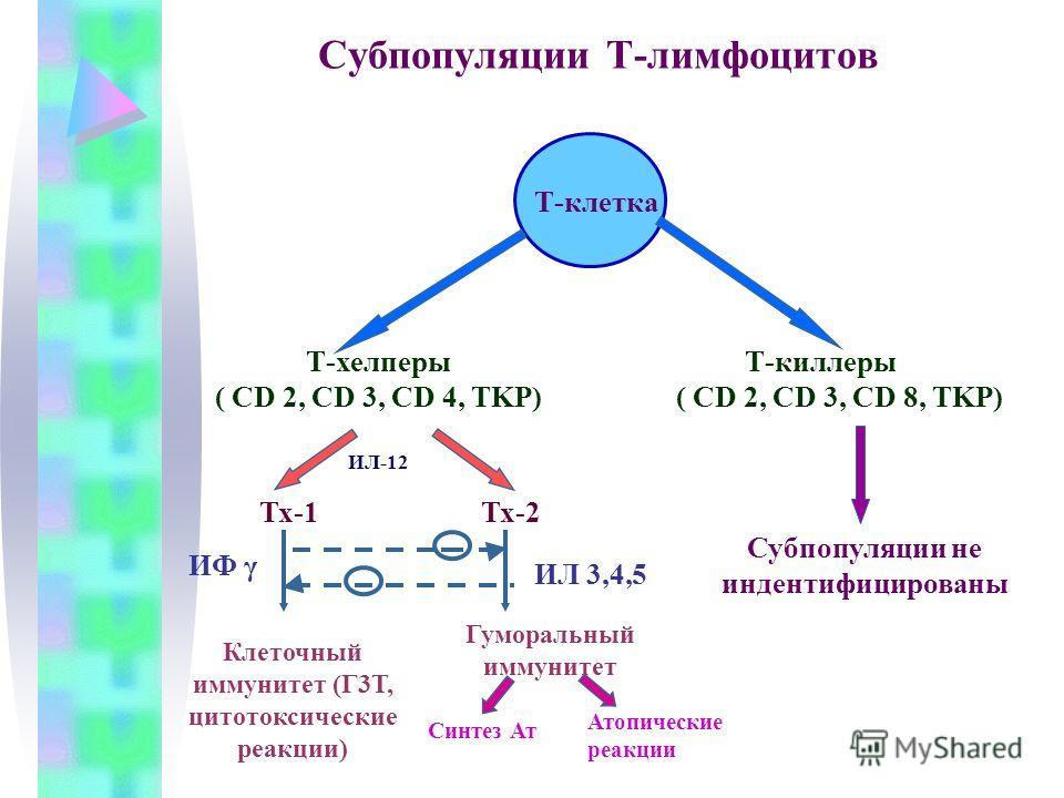 Субпопуляции Т-лимфоцитов Т-клетка Т-хелперы ( CD 2, CD 3, CD 4, TKP) Т-киллеры ( CD 2, CD 3, CD 8, TKP) Тх-1Тх-2 Клеточный иммунитет (Г3Т, цитотоксические реакции) Гуморальный иммунитет Синтез Ат Атопические реакции Субпопуляции не индентифицированы
