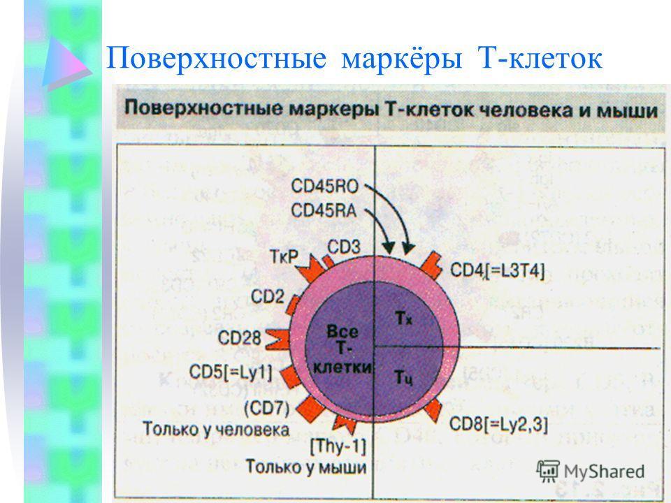 Поверхностные маркёры Т-клеток