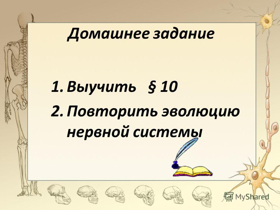Домашнее задание 1.Выучить § 10 2.Повторить эволюцию нервной системы